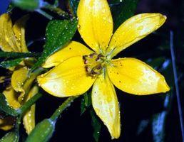 Flores que florecen durante los meses de verano y otoño
