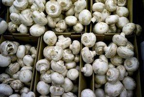 Cómo cultivar hongos blancos en el hogar