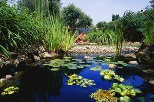 Cómo reparar un Daño Pond Liner Con Sosa