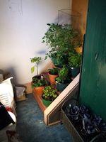 Guía para la jardinería de interiores