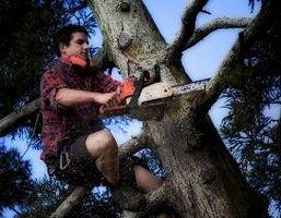 Cómo podar un árbol con una motosierra