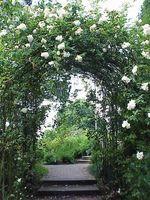 Ideas sobre la colocación de las rosas que suben