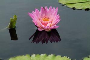 La información sobre las plantas que viven en el agua