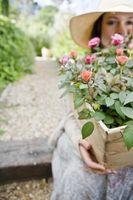 El control orgánico de plagas para un vivero de plantas