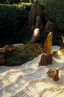 5 Las plantas que se pueden usar en paisajes de agua inteligentes