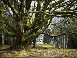 Tipos de Musgo en ramificaciones de árbol
