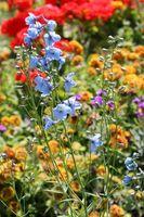 Mejores Abonos para un jardín de flores