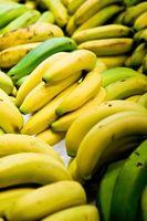 Las arañas que viven en Plátanos