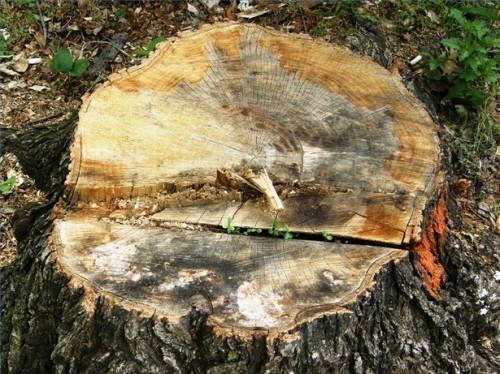 Métodos de eliminación del tocón de árbol