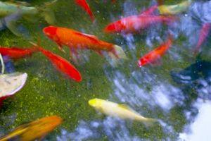 ¿Qué tipo de pintura se debe Puedo pintar el interior de mi estanque de peces Con?