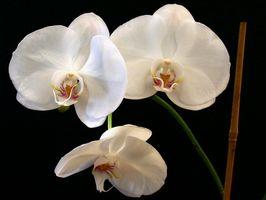 Lista de las flores autógamas