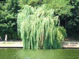 Arbustos que crecen en los pantanos