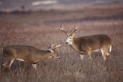 Cómo construir Parcelas forrajeros para los ciervos