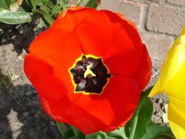 Las partes interiores de una flor