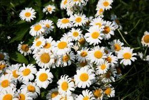 El mejor fertilizante para las plantas florecientes