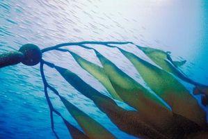 Plantas que viven en las profundidades del mar