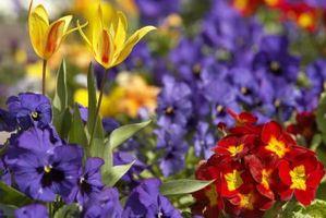 Cómo diseñar un jardín de flores del patio trasero Pequeño