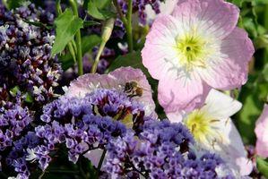 Usos de la cera de abejas alrededor de su casa