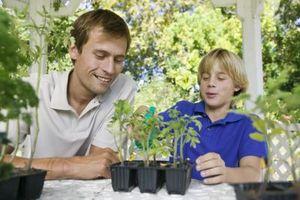 Importancia de la preparación antes de plantar las plantas