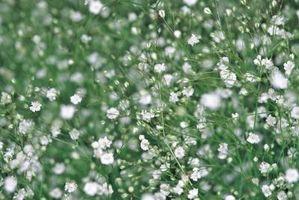 Las plantas perennes resistentes al calor