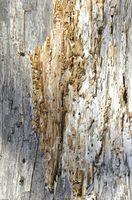 Formas naturales para repeler a las termitas