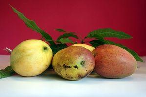 Cómo proteger los árboles de mango a partir de invierno