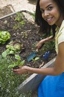 Cómo dar nitrógeno a las plantas