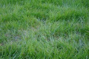 Remedios caseros para matar las malas hierbas Yard