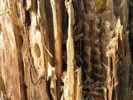 Drywood Opciones de tratamiento de termitas