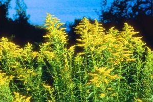 Los nombres de flores que pueden ser polinizadas por viento