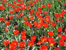 Fertilizantes orgánicos vs. fertilizantes regular