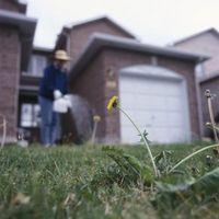 Vs. orgánica Los pesticidas convencionales