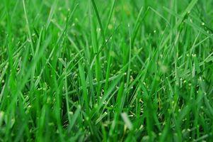 Cuando aplicar fertilizantes Scotts a un césped?