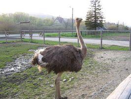 Materiales para construir un cobertizo de avestruz