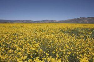Las mejores flores para plantar en Nuevo México