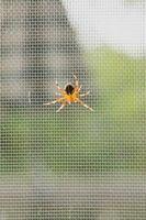 Cómo utilizar las naranjas como una araña Repelente