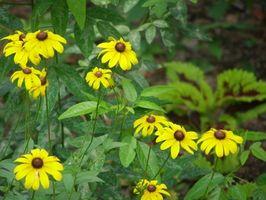 Las mejores flores para plantar en Panhandle de Florida