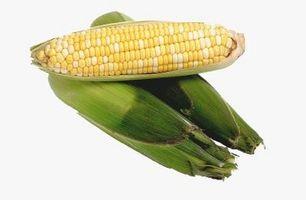 Cuándo cosechar las mazorcas de maíz de la mazorca?