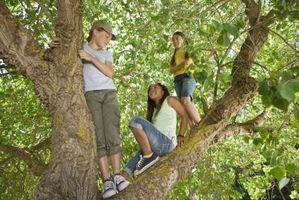 ¿Qué enfermedad causa bultos de ramas de árboles?