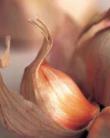 Cómo cultivar y cosechar Ajo