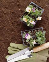 Plantas en maceta para tiempo frío