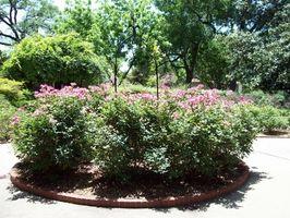 Arbustos para suelo alcalino