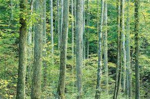 Las maderas duras y blandas