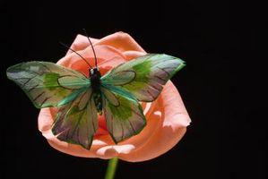 5 diferentes etapas de crecimiento de la flor