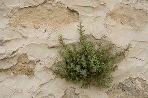 Herbicidas caseros con lejía
