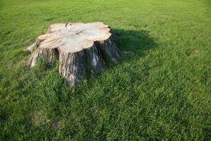 Maneras de deshacerse de tocones y raíces