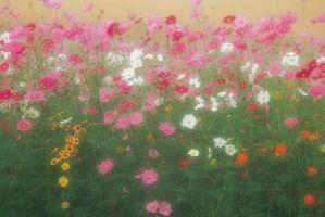 Cómo planificar un jardín de flores silvestres
