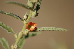 La identificación de la hoja de plantas con flores