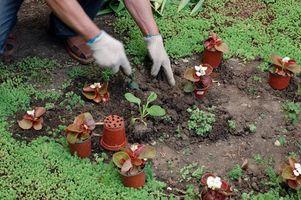 El mejor momento del día para Semillas de plantas