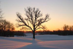 ¿Qué tipo de árboles frutales crecen mejor en el norte de Illinois?